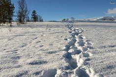 Caminos sin trillar. Laponia noruega / Wild nature