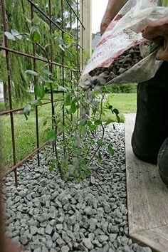 Slik lager du et blomstrende gjerde - Garden Types, Garden Paths, Garden Art, Garden Design, Porch Garden, Garden Trellis, Terrace Garden, Garage Pergola, Diy Pergola