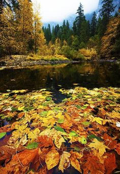 Fall travel in Yosemite National Park: Leaf Collage, Merced River, Yosemite…