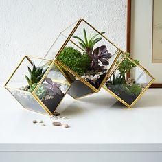 Cube Terrarium #westelm