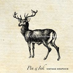 Deer Digital Vintage Graphic No.2 Antique by PenandInkVintage
