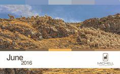 Michell Calendar- Andean Heritage Colour Inspiration - June 2016 #alpaca #alpacayarns #finestperuvianalpaca
