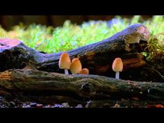 Timelapse Fungi to save the earth