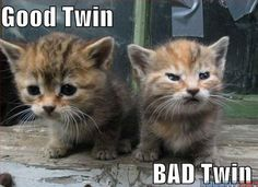 Good Twin, Bad Twin