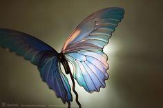 簪作家榮 2011ナガサキアゲハ 簪  Japanese hair accessory -Butterfly Kanzashi- by Sakae, Japan   http://sakaefly.exblog.jp/   http://www.flickr.com/photos/sakaefly/