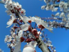 Aptos, CA - February 8th 2012 [cultivated]