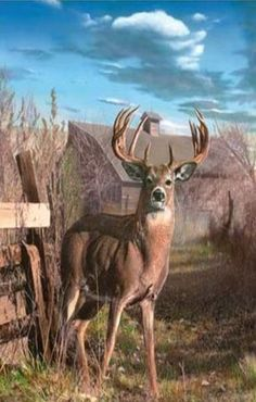 Hurry, look, there's a big buck out by the barn!