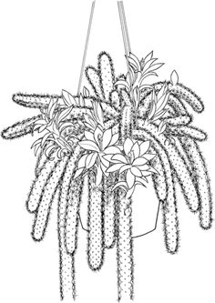 prickly pear cactus cactus and coloring pages on pinterest