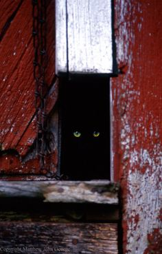 Peeping Tom by Matthew John George on Capture Wisconsin // A barn cat warily peering out of his safe place.