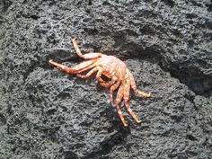 Crab on Lava Rock Lava, Adventure, Rock, Skirt, Locks, Rock Music, The Rock, Fairytail, Pallet