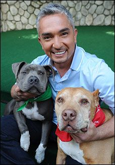 Cesar Milan- how to bring a second dog into the home.