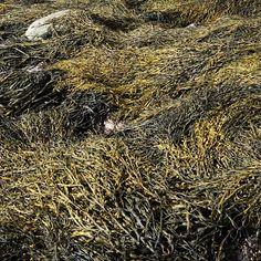 Seaweed Bundle
