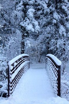I wish I was there walking along the bridge with only nature to be heard. What a dream!