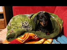 DIY Puppy Snuggle Sleeper Bag [EASY] - Whitney Sews @Amelia Rosales Sánchez Stone Ford @Kayla Barkett Barkett Ford @Kara Morehouse Morehouse Paul (For Delilah!)