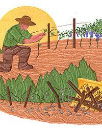 The Battle for America's Oldest Vines #Wine #Wineeducation #Winenews