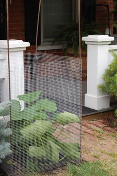 Vertical Gardening!  Make the Most of Your Space With a Vegetable Cage
