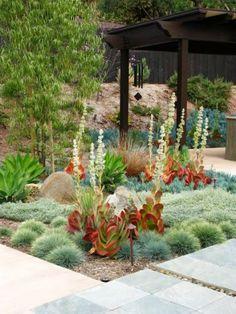 Blue fescue, kalanchoe, agave, succulents by Debora Carl Landscape Design.