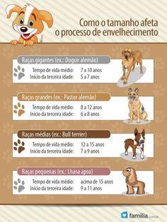 Familia.com.br | #Cão idoso: como #cuidar dele? #Animaisdeestimacao #Lar