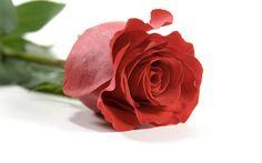 Single Red Rose Wallpapers  Wallpaper  1920×1200 Rose Images With Love Wallpapers (54 Wallpapers) | Adorable Wallpapers