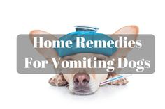 When your dog is sick, it's a serious situation. You want to help, but may not know how. I'm going to cut right to the chase and give you some home remedies for vomiting dogs.