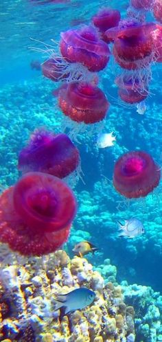 Jellyfish с английского превод меддузы