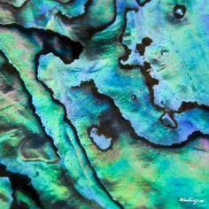 Abalone shell by monteregina, via Flickr