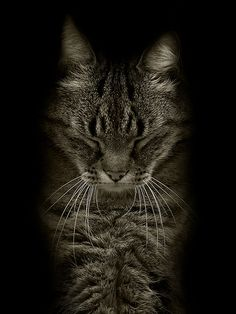 By Kai Fagerström Canvas Art, Canvas Prints, Neko Cat, Love Wall Art, All About Cats, Animals And Pets, Framed Prints, Black And White, Cute