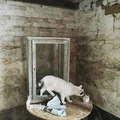 #curiouscat #cats #catsofinstagram by detweedelente