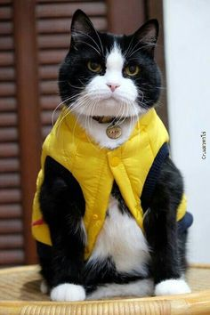 Well, if you're gonna make me go out and play in the rain, it's only fair I put on my waterproof jacket...