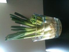 Growing green onions from the scraps in an old candle jar! Froze the candle to get rid of the remaining wax, a tip I also saw on Pinterest!