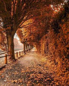 Tunnel of Autumn The post Tunnel of Autumn autumn scenery appeared first on Trendy. Autumn Scenes, Autumn Cozy, Autumn Rain, Autumn Walks, Autumn Morning, Fall Wallpaper, All Nature, Autumn Nature, Autumn Photography