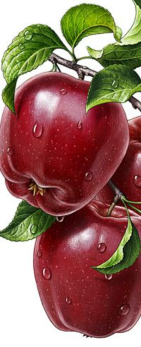 Illustrations with products: beautiful fruits, berries, vegetables, food L'art Du Fruit, Fruit Art, Watercolor Fruit, Fruit Painting, Illustration Artists, Botanical Illustration, Illustrations, Vegetable Pictures, Still Life Fruit