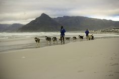 Mush it Up Husky sledding in Cape Town - Greenhairmermaid Green Hair, Sled, Cape Town, Husky, Mermaid, Creatures, Beach, Photography, Outdoor