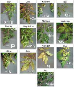 Hydroponic Gardening, Hydroponics, Organic Gardening, Gardening Tips, Tomato Garden, Vegetable Garden, Freshwater Plants, Plant Diseases, Gardens