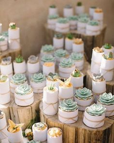 you believe that these are cupcakes and not real succulents? Can you believe that these are cupcakes and not real succulents? , Can you believe that these are cupcakes and not real succulents? Diy Wedding Cupcakes, Vegan Wedding Cake, Wedding Cup Cakes, Beach Cupcakes, Pretty Cupcakes, Cupcakes Succulents, Sage Green Wedding, Purple Wedding, Gold Wedding