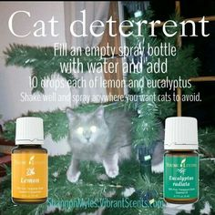 Cat deterrent using Young Living Essential Oils