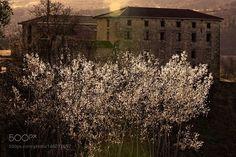 Spring Backlight http://ift.tt/1LNbHFy
