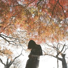 . turn of the seasons  by shinichi38
