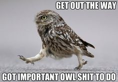 Owl shit :)