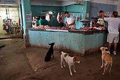 Cuba - La patience est une vertue