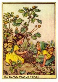 Black Medick Flower Fairy Vintage Print by Cicely Mary Barker, first published in London by Blackie, 1948 in Flower Fairies of the Wayside.