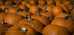 Pic: Pumpkins