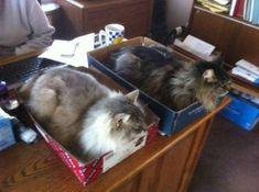 Un bureau sans chat