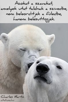 Shop Funny Valentine Day Polar Bears Holiday Card created by AnastasiaDesign. Happy Valentines Day Funny, Proverbs 12, Amor Animal, Love And Forgiveness, Holiday Cards, Polar Bears, Teddy Bears, Relationship Goals, Relationships