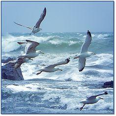 Birds at the beach Beach Art, Ocean Beach, Ocean Waves, Photo Bretagne, Sea Birds, Wild Birds, Seascape Paintings, Beach Scenes, Bird Art