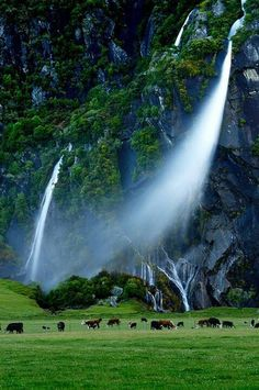 i know these falls have been pinned before, but not like this! how windy it must have been!!!  Waterfall Cliffs, New Zealand