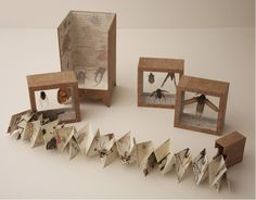 Artist Book: cheryl coon  Bestiary - Insect