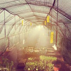 a Estufa de Vilar — @a_estufa_de_vilar #fewyearsago #beginning...