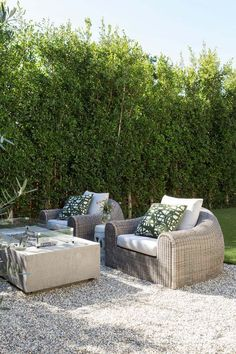 Tree, Furniture, Coffee table, Table, Wicker, Wall, Grass, Couch, Botany, Garden,