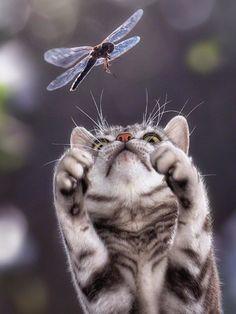 #AMAZING##CAT##CUT# #ANIMALS##PETS#